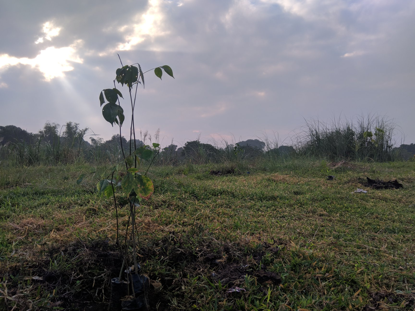 Tree Planting for Rehabilitation of Closed Dumpsite